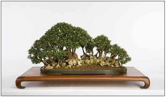 screenhunter 34 Bonsai: A arte de criar árvores em miniatura