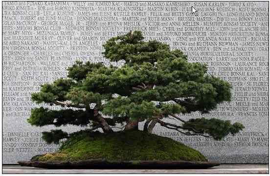 screenhunter 36 1 Bonsai: A arte de criar árvores em miniatura
