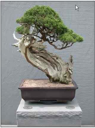 screenhunter 41 Bonsai: A arte de criar árvores em miniatura