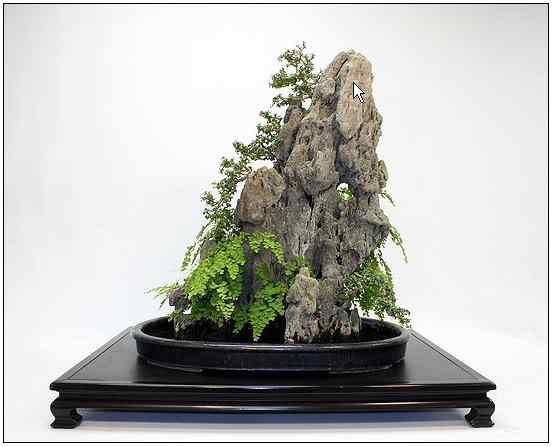 screenhunter 8 1 Bonsai: A arte de criar árvores em miniatura