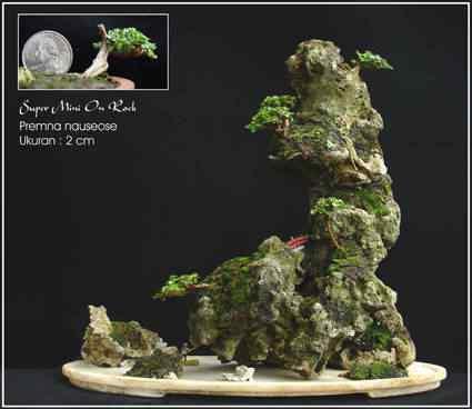 super mini on rock k Bonsai: A arte de criar árvores em miniatura