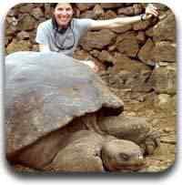 tartaruga gigante Artigos legais do Mundo Gump