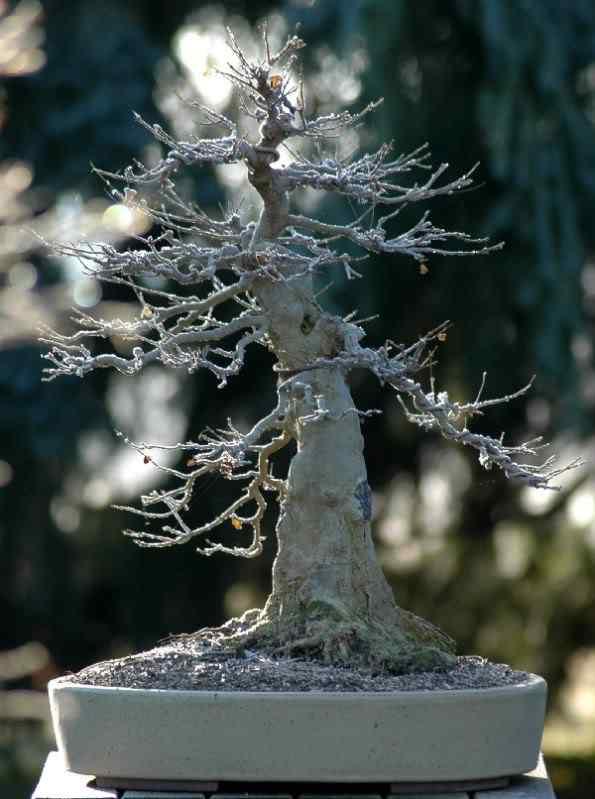 trident100cm Bonsai: A arte de criar árvores em miniatura