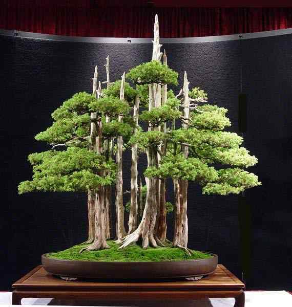 wbc2005g Bonsai: A arte de criar árvores em miniatura