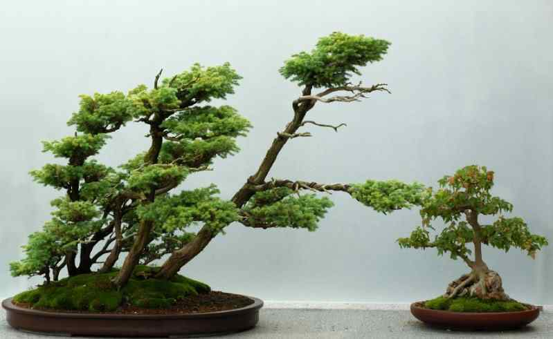 windswept Bonsai Bonsai: A arte de criar árvores em miniatura