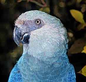 Ararinha Azul2 50 seres inacreditavelmente azuis