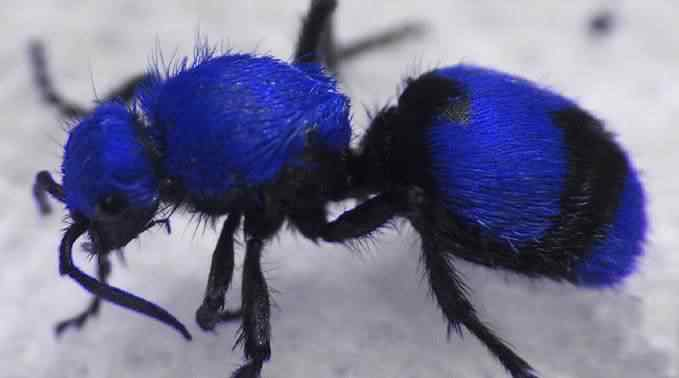 BlVlvAnt3 50 seres inacreditavelmente azuis