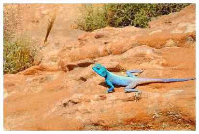 bluelizard 50 seres inacreditavelmente azuis