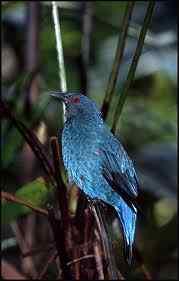 iridescente 50 seres inacreditavelmente azuis