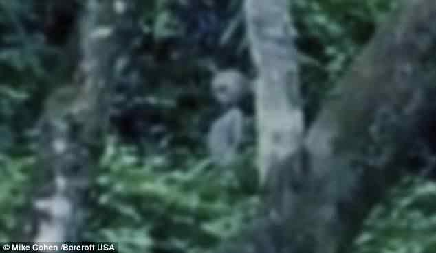 article 0 0E78059500000578 416 634x369 Aliens registrados em video na Amazônia?