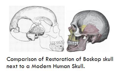 boskopskullcomparison Mais um crânio alongado descoberto na Sibéria