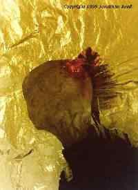 reed2 Guardou o ET na geladeira e foi ver televisão.   3 Casos de pessoas que alegaram ter aliens guardados em casa