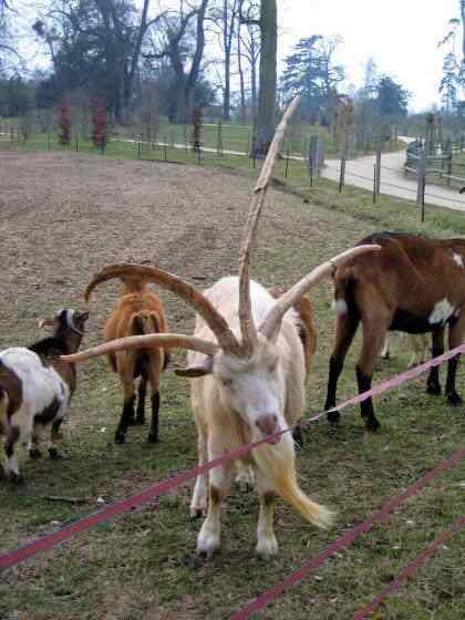 4horns.preview Os animais com os chifres mais legais do mundo