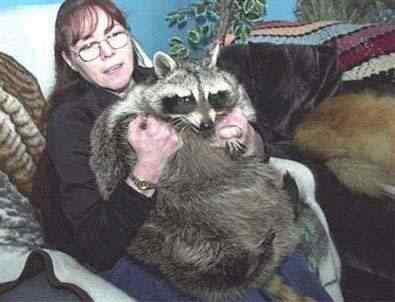 395x302 20 obese animals 4c93602e66fcc Cachorros, gatos e animais obesos