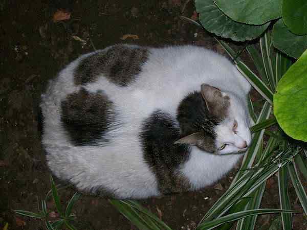 Puh 38 Cachorros, gatos e animais obesos