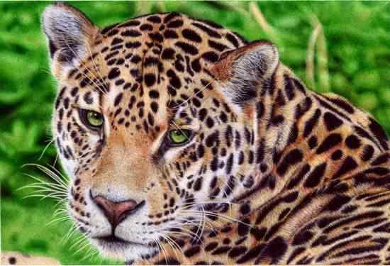 Samuel Silva drawings3 550x375 Feito com caneta esferográfica