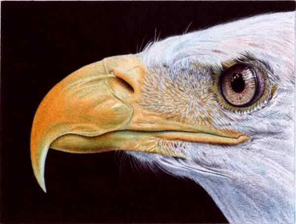 bald eagle   ballpoint pen by vianaarts d52qwc2 Feito com caneta esferográfica