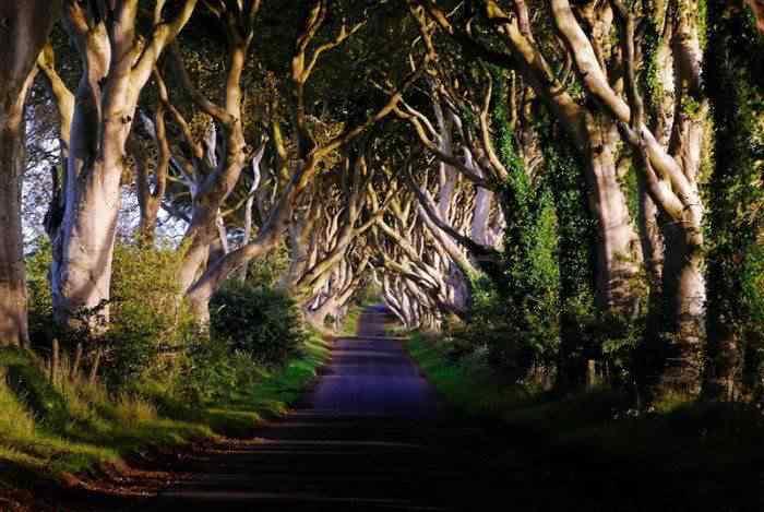 road 001 O incrível túnel de árvores da Irlanda