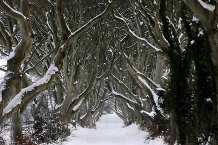 road 003 O incrível túnel de árvores da Irlanda