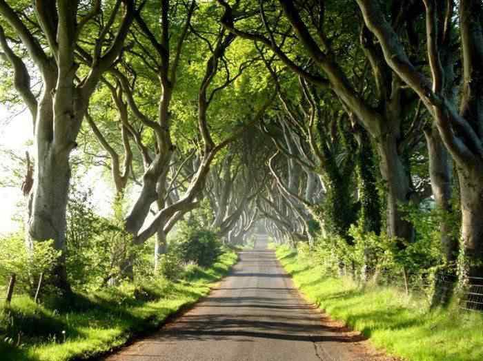 road 004 O incrível túnel de árvores da Irlanda