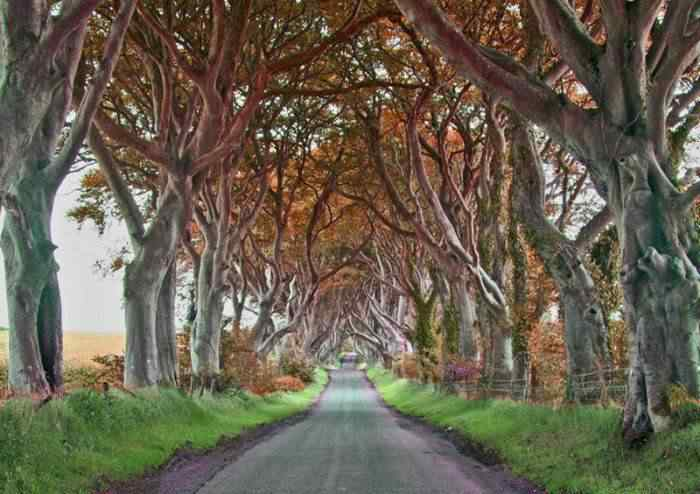 road 006 O incrível túnel de árvores da Irlanda