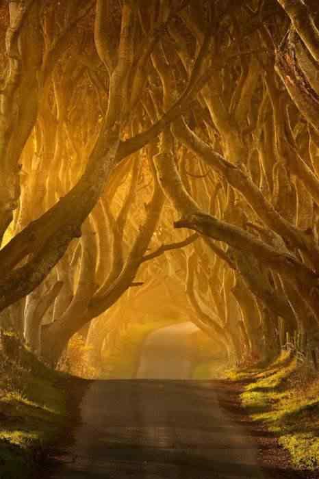 road 007 O incrível túnel de árvores da Irlanda
