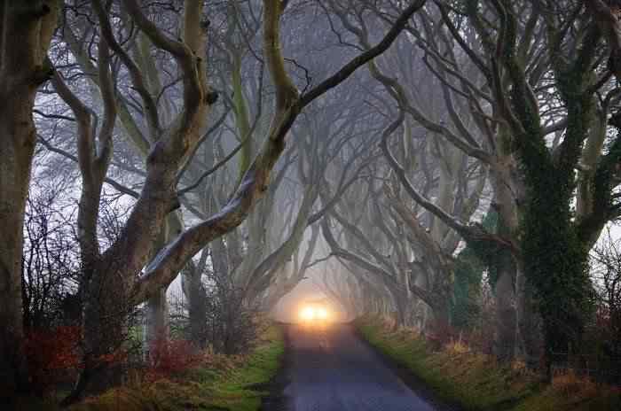 road 009 O incrível túnel de árvores da Irlanda
