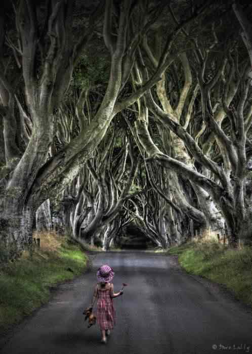 road 010 O incrível túnel de árvores da Irlanda