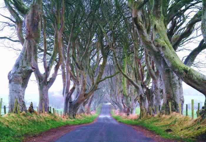 road 014 O incrível túnel de árvores da Irlanda