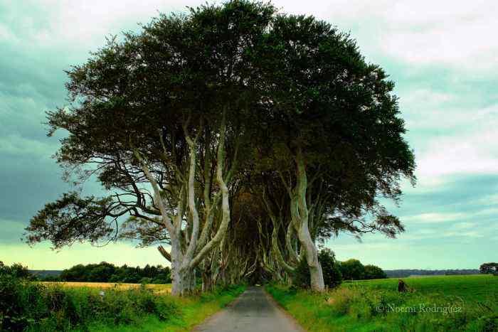 road 015 O incrível túnel de árvores da Irlanda