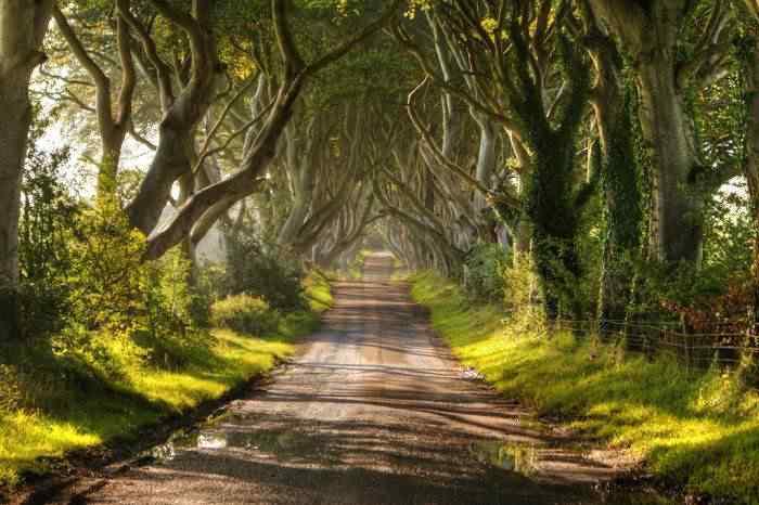 tunel O incrível túnel de árvores da Irlanda