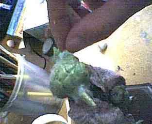yoda clip image066 Criando o Yoda