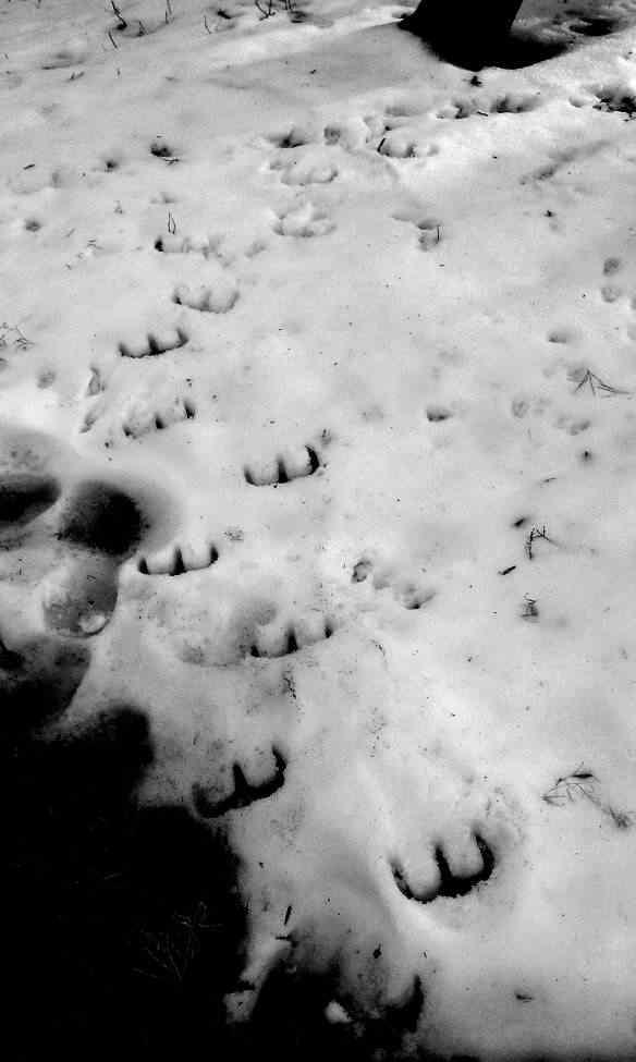 copy of devils footprints Pegadas estranhas