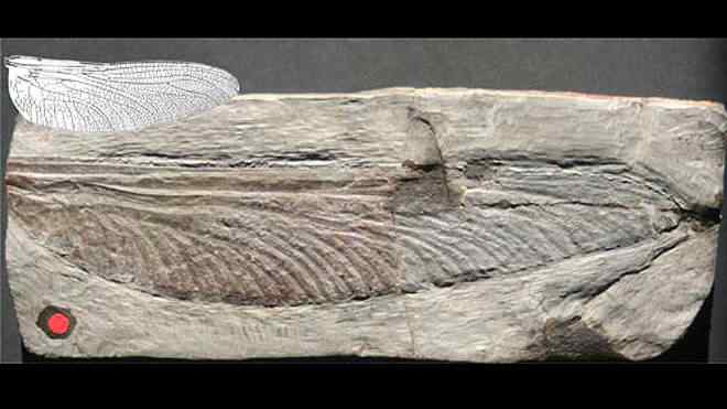 giant ancient insect wing Pegadas estranhas