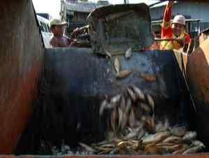 A pesca produz as maiores matanças e o maior desperdício