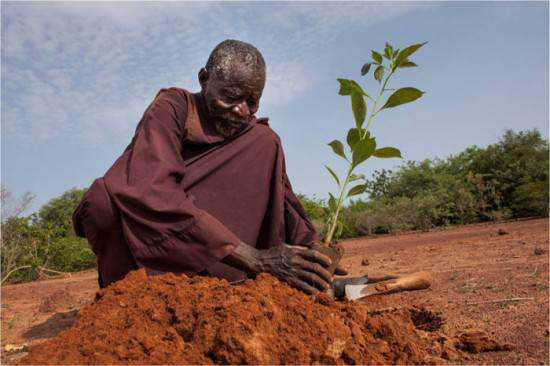 Yacouba Sawadogo 550x366 Yacouba Sawadogo    o homem que venceu um deserto
