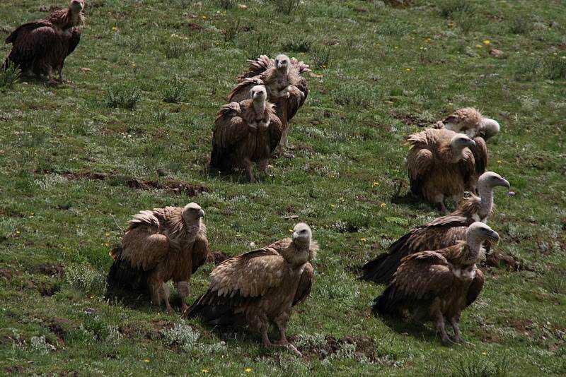 0 ef742 13d5c21f orig Sepultamento celestial no Tibete (AVISO: não recomendado para pessoas impressionáveis)