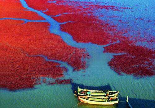 3db271ff950444df94e46ce21b99fb46 As praias cor de sangue na China
