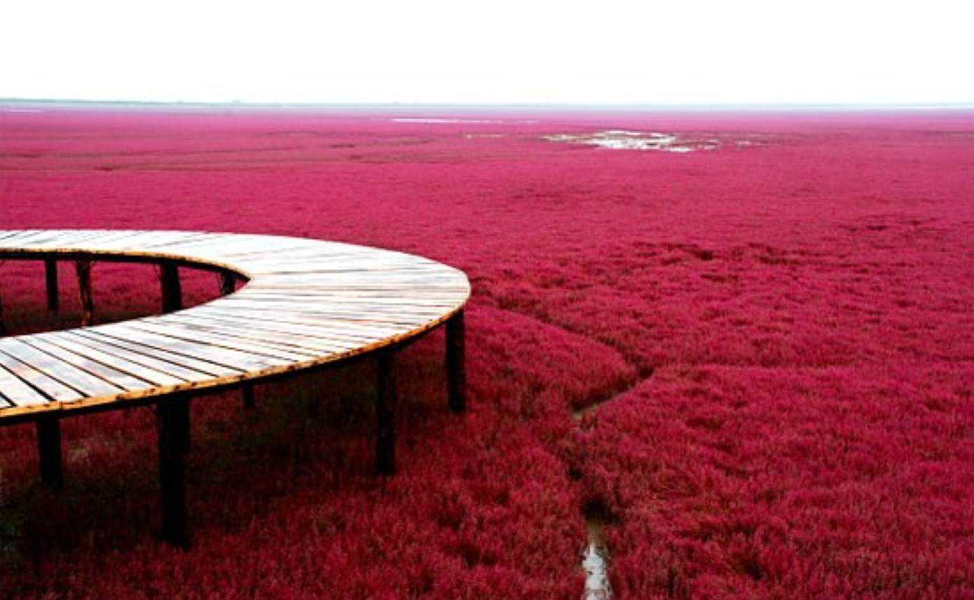 Red Beach Panjin China3 As praias cor de sangue na China