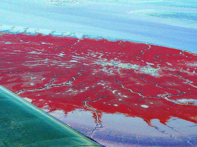 Red beach 3 As praias cor de sangue na China