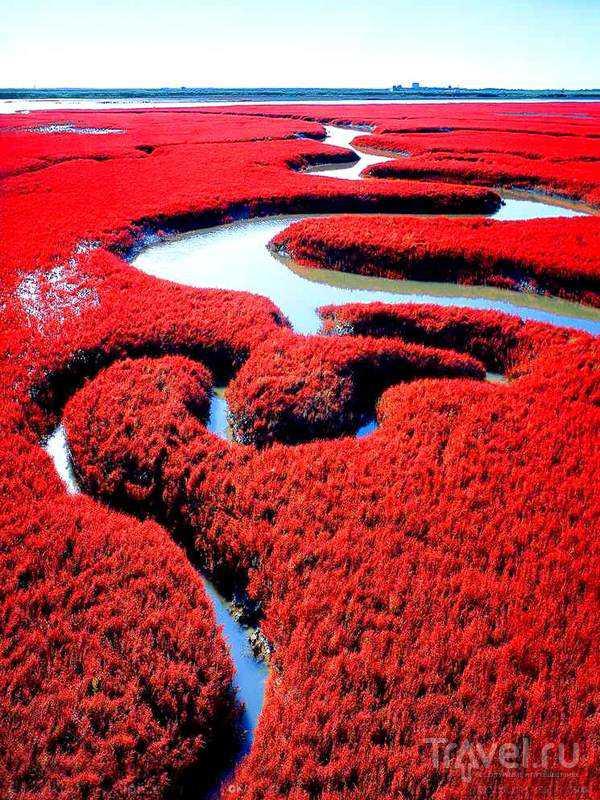 panjin 6 As praias cor de sangue na China