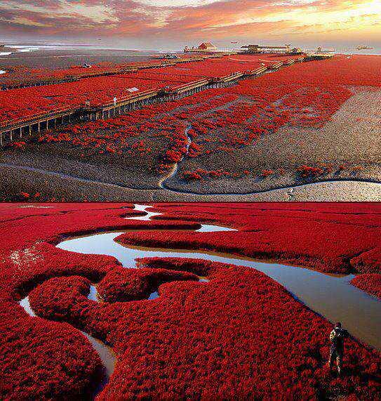 tumblr m5c6rj1qGs1r6b8aao1 1280 As praias cor de sangue na China