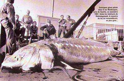 Giant Sturgeon Monstro de Loch Ness fotografado novamente. Desta vez, do céu. Será?
