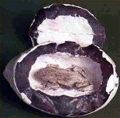 1 Mistério intrigante: Sapos dentro de pedras