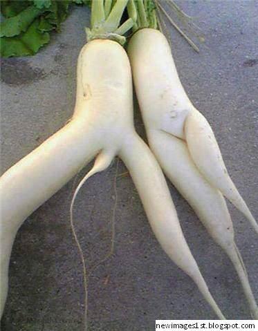 %name Os vegetais mais bizarros do mundo