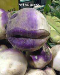 images 31 Os vegetais mais bizarros do mundo