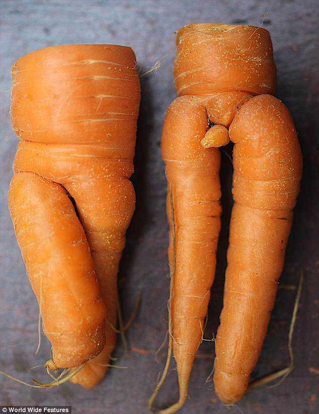 mr and mrs carrot Os vegetais mais bizarros do mundo