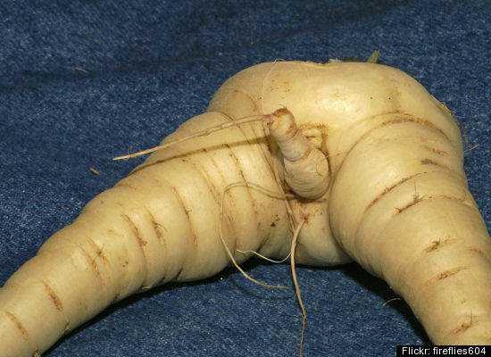 parsnip Os vegetais mais bizarros do mundo