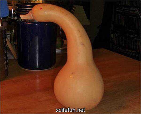 pictures of funny vegetables 11 Os vegetais mais bizarros do mundo