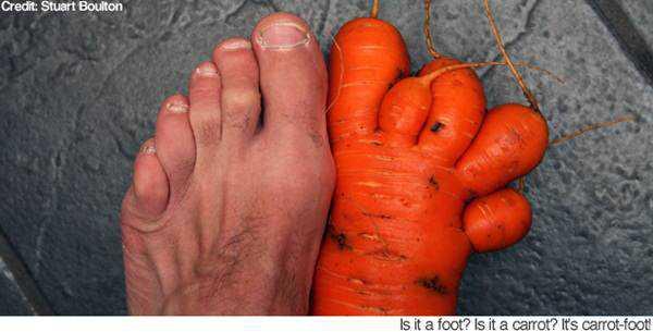 pictures of funny vegetables 9 Os vegetais mais bizarros do mundo